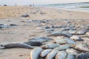 Mauritanie: un désastre écologique frappe le Banc d'Arguin