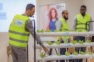 Greenhouse, la start-up Agritech qui révolutionne la production maraîchère en Mauritanienne