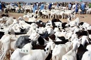 Mauritanie : flambée du prix du mouton à l'approche de la fête de l'