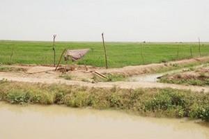 L'Afrique dépense 6 milliards d'euros par an pour ses importations de riz