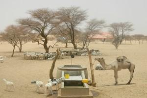 Crise pastorale explosive en Mauritanie : Note d'alerte