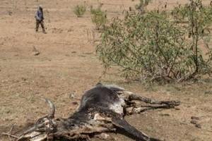Mauritanie: le ROSA tire la sonnette d'alarme face à une crise pastorale explosive