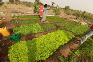 Accès des femmes à la propriété foncière au Gorgol : les coutumes contredisent les lois