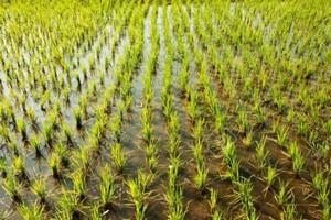 Mauritanie : le secteur agricole bénéficiera de 498 millions d'ouguiyas du programme contrat Etat/SNAT
