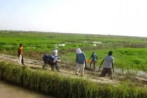 Importantes pertes pour les agriculteurs du Trarza