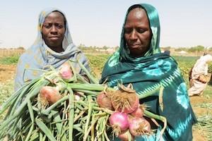 Mauritanie : l'agriculture pèse 14% du PIB (BAD)