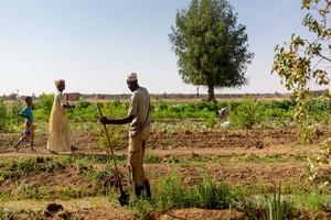 Dans l'ouest de la Mauritanie, un projet met fin à l'exode des agriculteurs et éleveurs