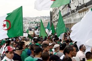 Algérie: «Gaïd Salah est une bête blessée»