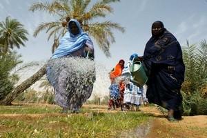 Mauritanie/COVID-19 : soutien allemand au PAM pour renforcer la résilience des populations