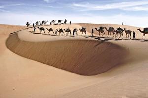 Sur la piste des découvreurs du Sahara