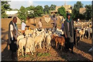 Les Peuls dénoncent un climat d'insécurité dans le centre du Mali