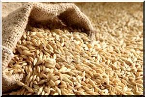 Détournement dans les banques des céréales : La Banque mondiale engage une enquête interne du Csa