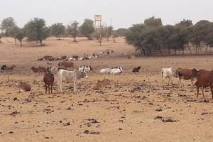 Reportage : l'Etat mauritanien investit dans les campagnes pour freiner l'exode rural [Vidéo]