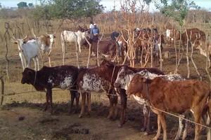 Mauritanie: les conséquences néfastes des fermetures des frontières sur la transhumance
