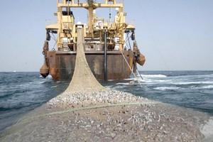 Pêche: des ONG accusent l'Italie de fermer les yeux sur le pillage des côtes ouest-africaines