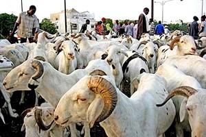«Les difficultés font que les éleveurs ne peuvent pas venir tôt»