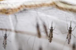 Afrique subsaharienne : le paludisme risque de tuer plus de personnes que le coronavirus, prévient l'OMS