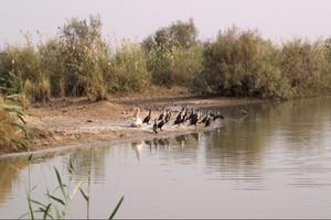 Nouvelle contribution de l'Union Européenne à la préservation de la biodiversité marine et côtière en Mauritanie