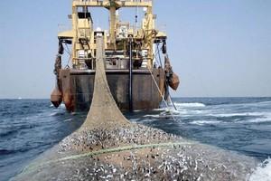 Petits pélagiques : une étude évalue le potentiel de la sous-région à 2, 2 millions de tonnes par an