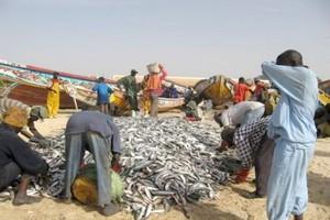 Mauritanie ●