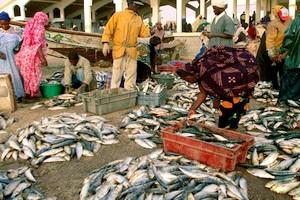 Convid-19 : La Mauritanie va réserver 10 mille tonnes de poissons pour éviter une crise alimentaire