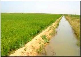 Aménagement de 3.500 nouveaux hectares irrigués en Mauritanie