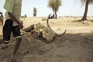 Sommet régional en Gambie sur la sécurité alimentaire en Afrique de l'Ouest