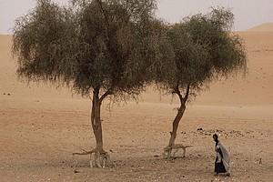 Mauritanie: une grave sécheresse menace la campagne agropastorale