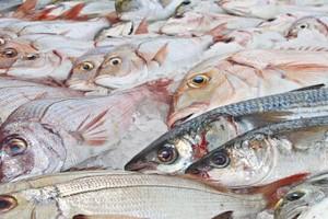 Mauritanie : les délestages menacent le stockage du poisson à Nouadhibou