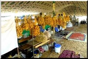 Festival des dattes de Tidjikja: La Batha et les grands axes de la ville nettoyés