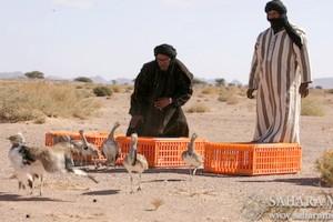 Mauritanie : la chasse interdite dans 5 wilaya du pays