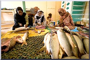 Mauritanie : faible niveau de développement, selon PNUD