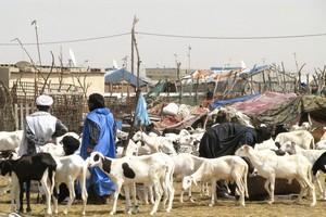 Forte envolée du prix du mouton en Mauritanie